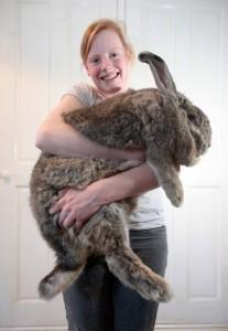 Extremely Big Rabbits (32 photos) 12