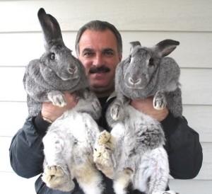 Extremely Big Rabbits (32 photos) 13