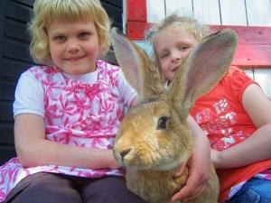 Extremely Big Rabbits (32 photos) 24