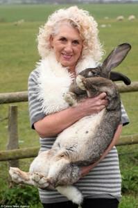 Extremely Big Rabbits (32 photos) 26