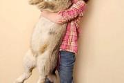 giant-rabbits (29)