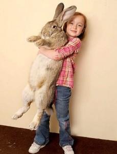 Extremely Big Rabbits (32 photos) 29