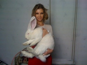 Extremely Big Rabbits (32 photos) 7