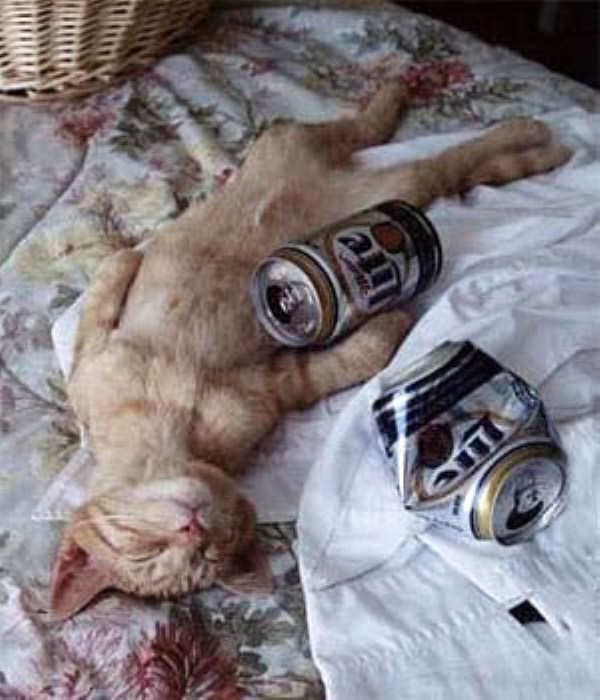 hangover-animals (15)