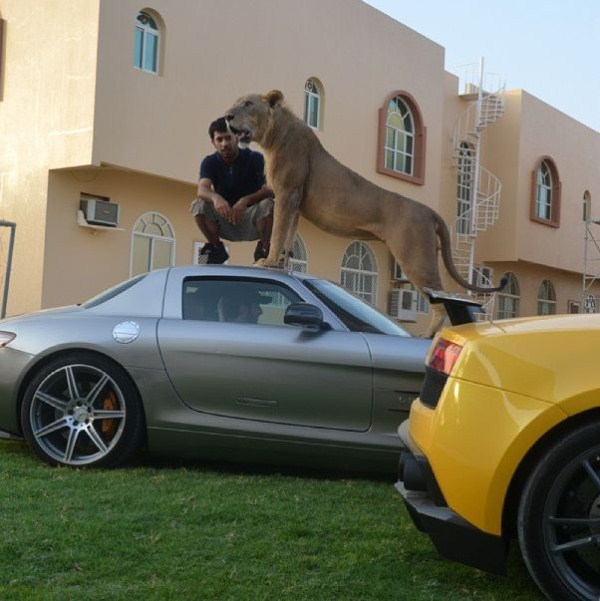 rich_guy_with_lions_instagram_01_1 (1)