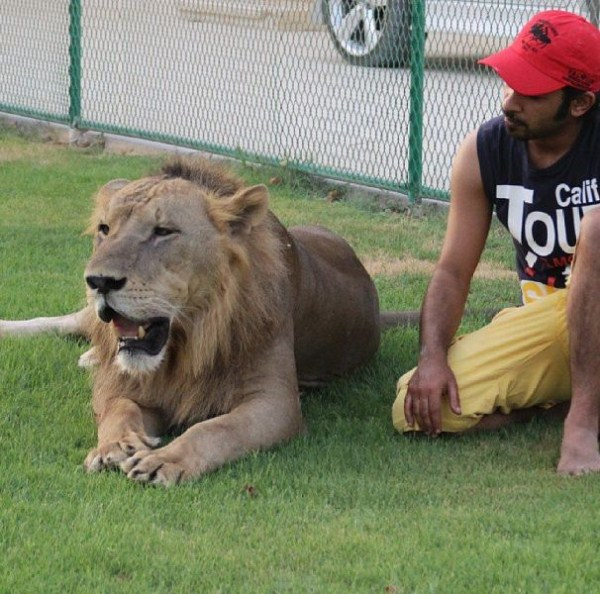 rich_guy_with_lions_instagram_01_1 (7)