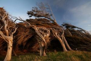 Trees Shaped into Amazing Form (17 photos) 1