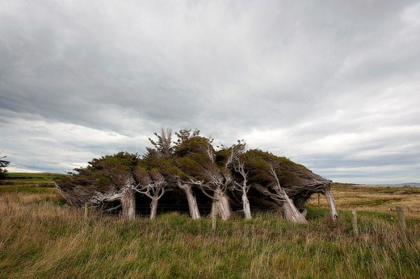 trees-shaped-into-beautiful-form-by-winds-10