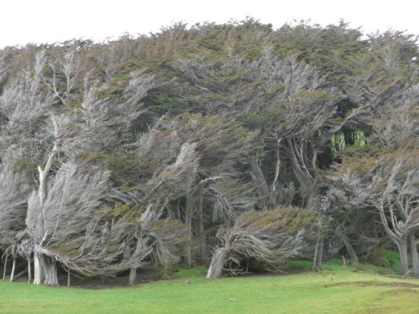 trees-shaped-into-beautiful-form-by-winds-11