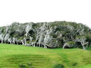 Trees Shaped into Amazing Form (17 photos) 12
