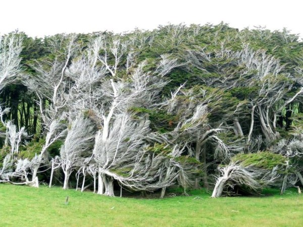 Trees Shaped into Amazing Form (17 photos) 14