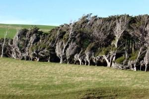Trees Shaped into Amazing Form (17 photos) 15