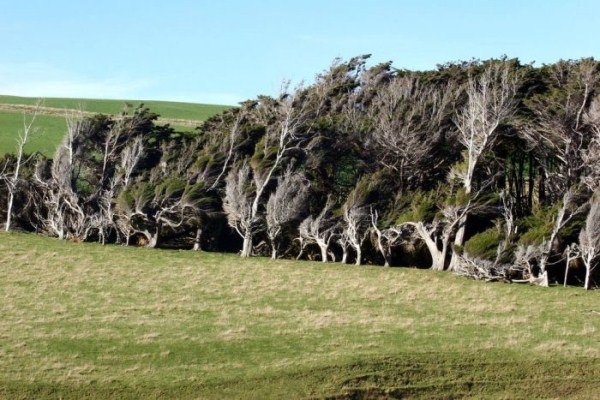 trees-shaped-into-beautiful-form-by-winds-15