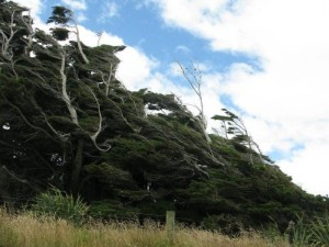 Trees Shaped into Amazing Form (17 photos) 16