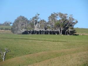 Trees Shaped into Amazing Form (17 photos) 2