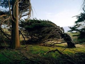 Trees Shaped into Amazing Form (17 photos) 3