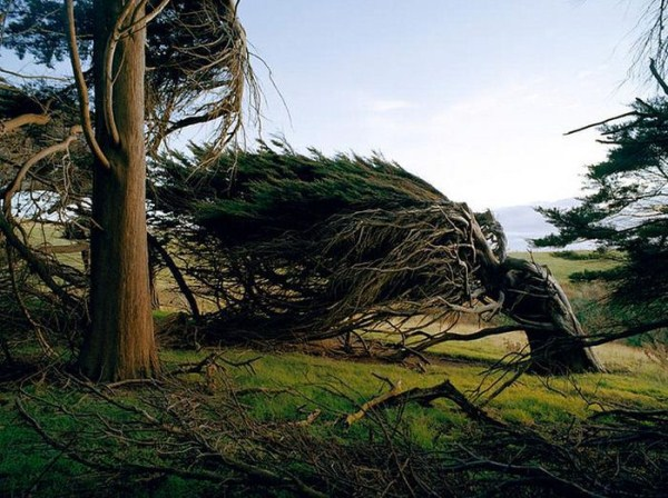 trees-shaped-into-beautiful-form-by-winds-3