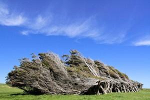Trees Shaped into Amazing Form (17 photos) 4