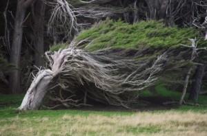 Trees Shaped into Amazing Form (17 photos) 5