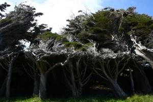 Trees Shaped into Amazing Form (17 photos) 6
