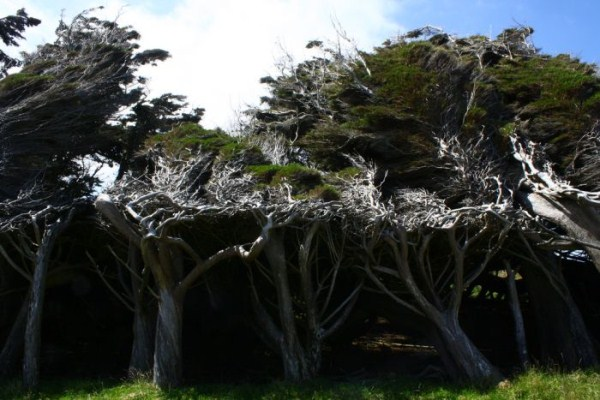trees-shaped-into-beautiful-form-by-winds-6
