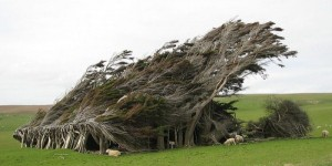 Trees Shaped into Amazing Form (17 photos) 7