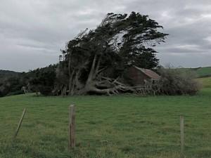 Trees Shaped into Amazing Form (17 photos) 8
