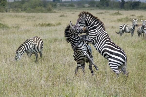 Animal Battles 10