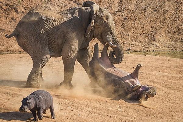 Animal Battles 11