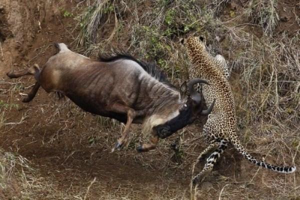 Animal-Battles (12)