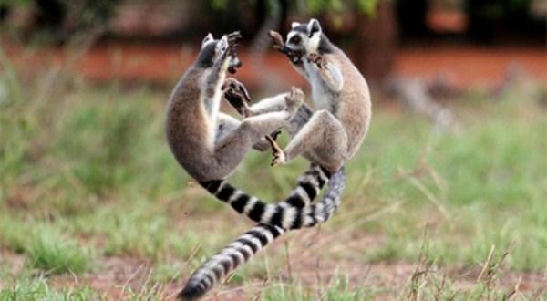 Animal-Battles (13)