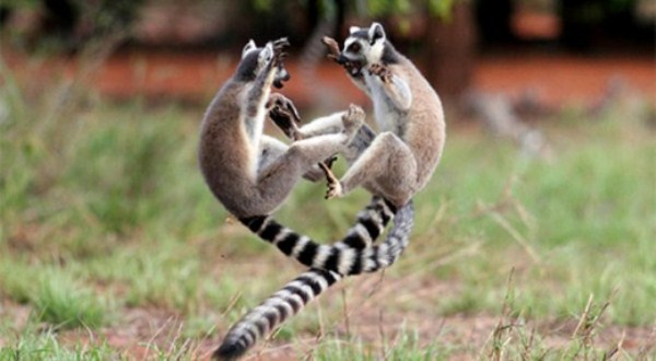 Animal Battles 13