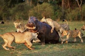 Wild Animal Fights (43 photos) 16