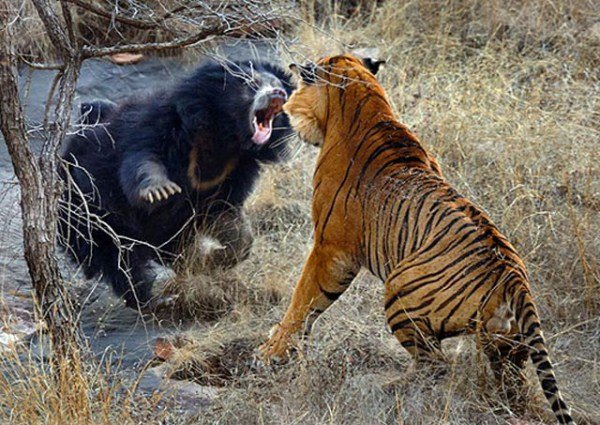 Wild Animal Fights (43 photos) 18