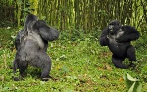 Wild Animal Fights (43 photos) 2