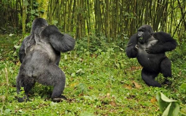 Animal Battles 2