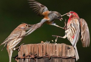 Wild Animal Fights (43 photos) 20