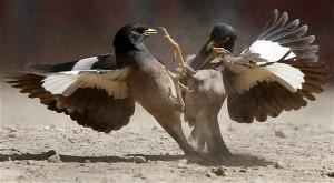 Wild Animal Fights (43 photos) 21