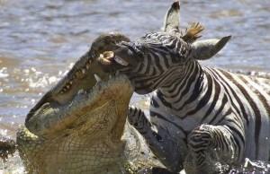 Wild Animal Fights (43 photos) 23