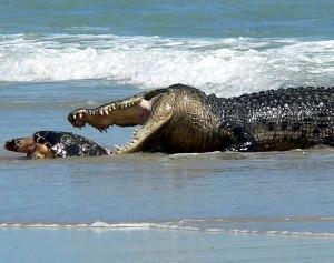 Wild Animal Fights (43 photos) 24