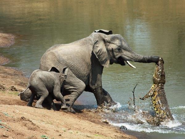 Animal Battles 25