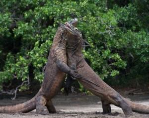 Wild Animal Fights (43 photos) 28