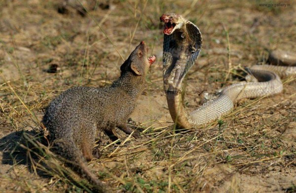 Animal Battles 29