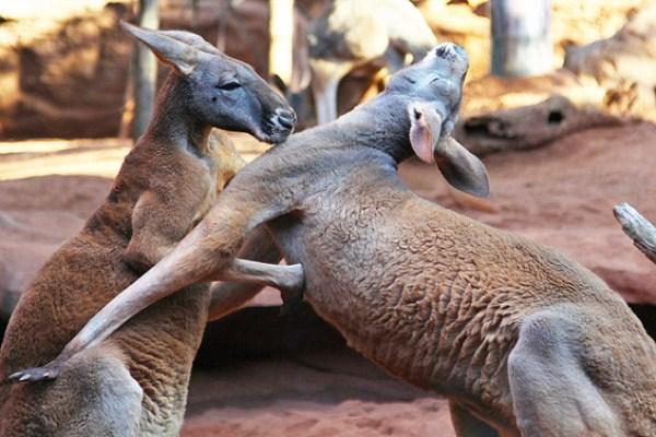 Animal Battles 3