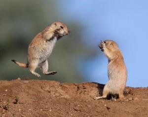 Wild Animal Fights (43 photos) 31