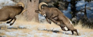 Wild Animal Fights (43 photos) 32