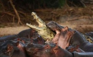 Wild Animal Fights (43 photos) 34