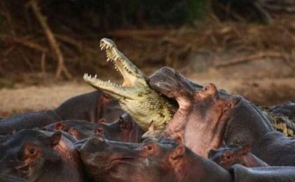 Animal Battles 34
