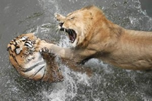Wild Animal Fights (43 photos) 37