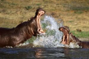 Wild Animal Fights (43 photos) 38